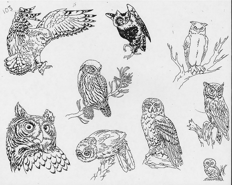 critical tattoo  aves variadas