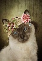 cat in straw hat