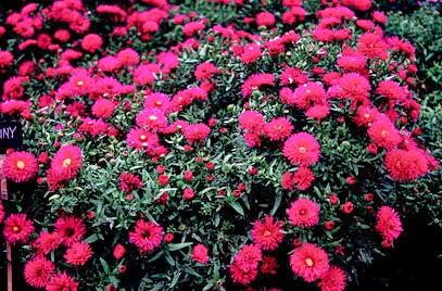 Piante e fiori maggio 2014 for Fiori pieno sole perenni