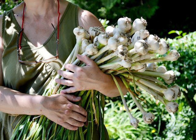 farming, farm life, gardening, country, garlic, plants, grow your own, catie beatty, lifestyle
