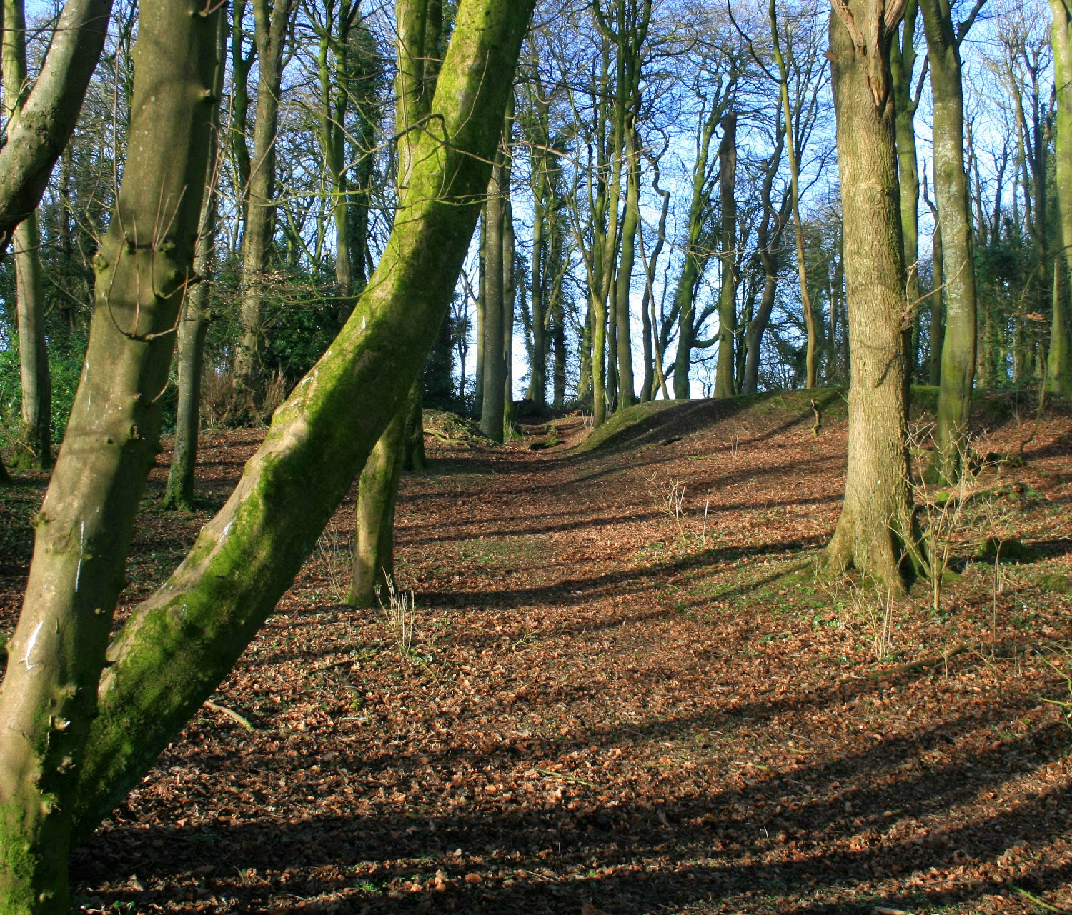 Looking across the clearing of the hill fort