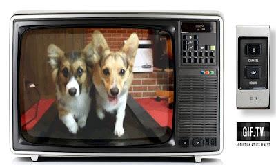 écran de télévision chien