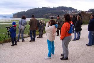Avistamiento de aves en Salnas de Ulló, Vilaboa, Pontevedra