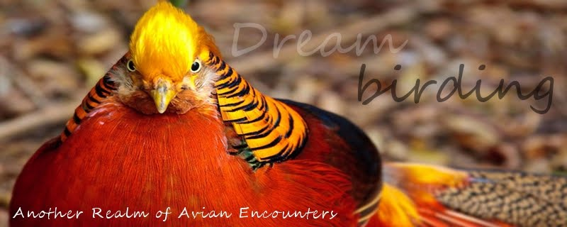 Dreambirding - Another Realm of Avian Encounters