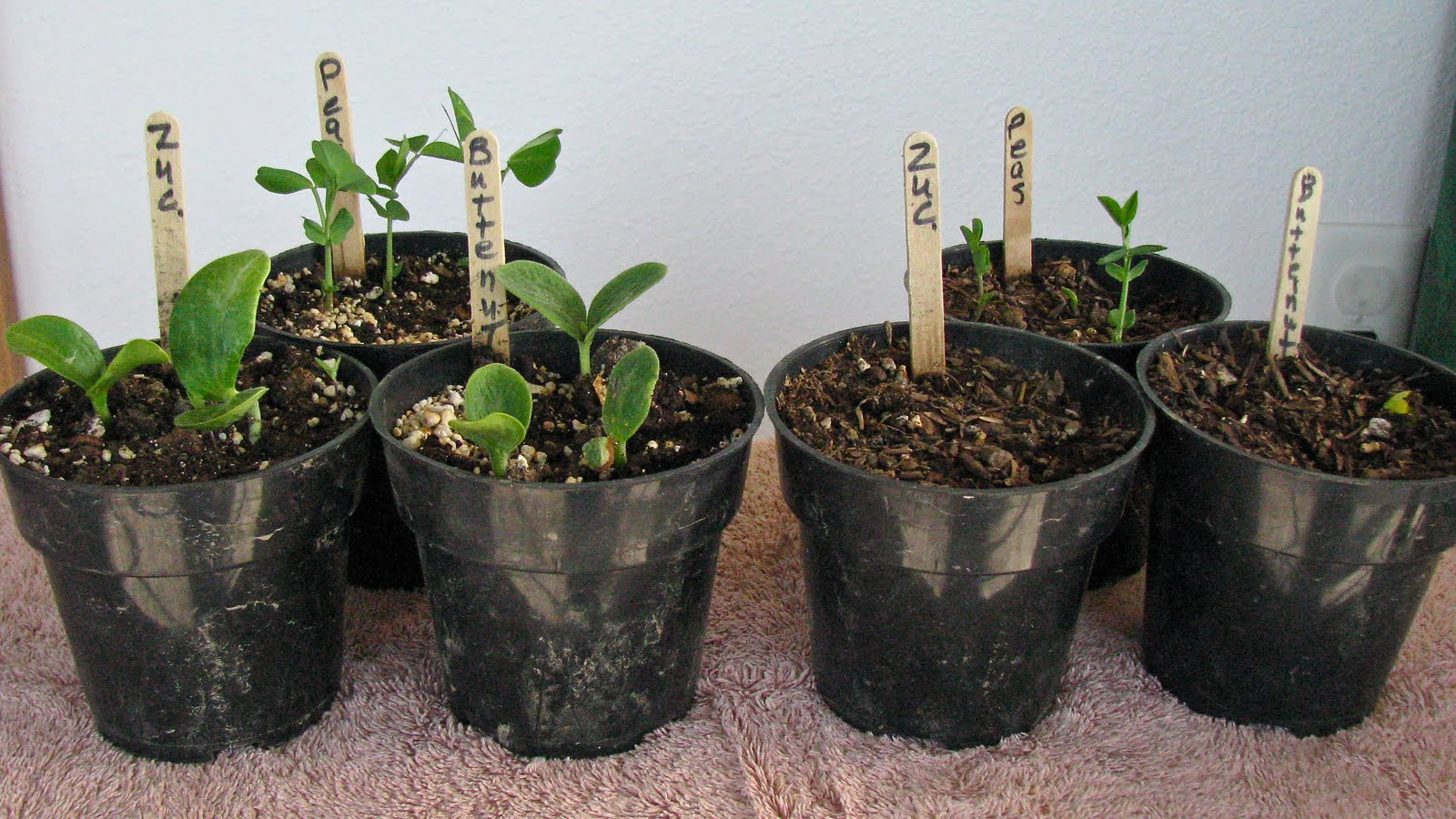 ... Than 10 Parts Soil To 1 Part Soil Less Mix For Any Vegetable Garden.  See Photo Below For Results Comparing A Soil Mix(left )from A Soil Less Mix (right).