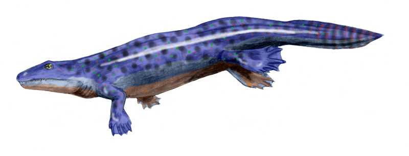 The first amphibians appeared approximately 370 million years ago    Devonian Amphibians
