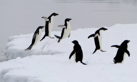 Happy feet: why a 61m-year-old penguin foot has researchers dancing for joy