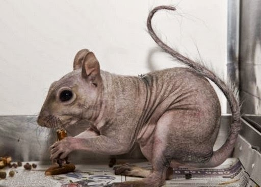 Animals without Hair