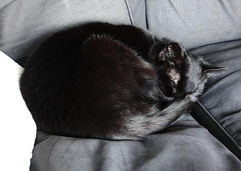 Sleepover Cat