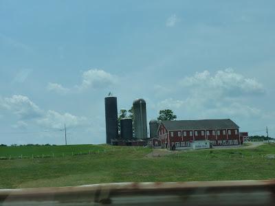 drink milk farm