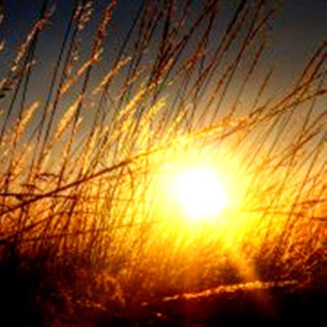 El laberinto de andrea la luz solar aumenta las defensas for Luz solar para exterior