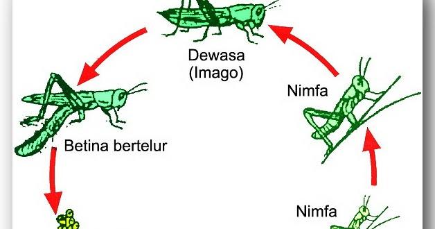 Ipa sd daur hidup hewan biologi hepta biologi ccuart Gallery