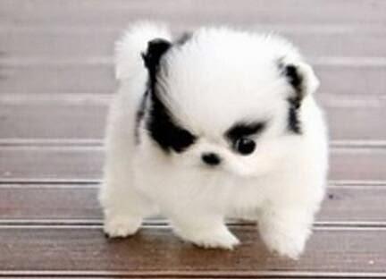 See more Cute puppy http://cutepuppyanddog.blogspot.com/