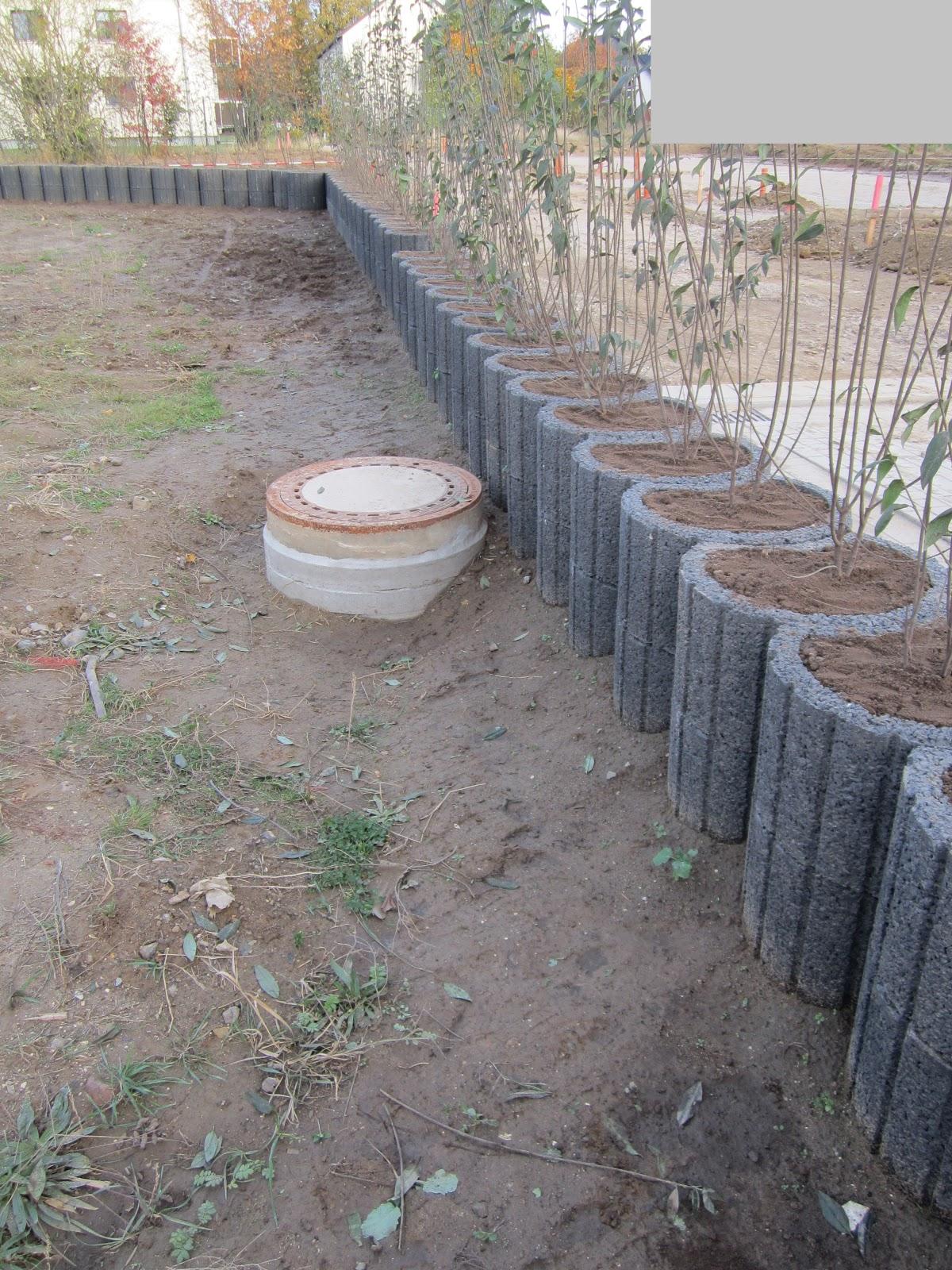 unser hausbau garten in eigenleistung hecke gepflanzt und geschnitten. Black Bedroom Furniture Sets. Home Design Ideas