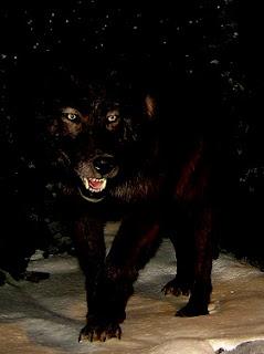 Lobo - Wolf