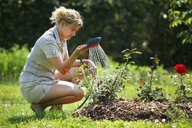 Rose Fertilizers