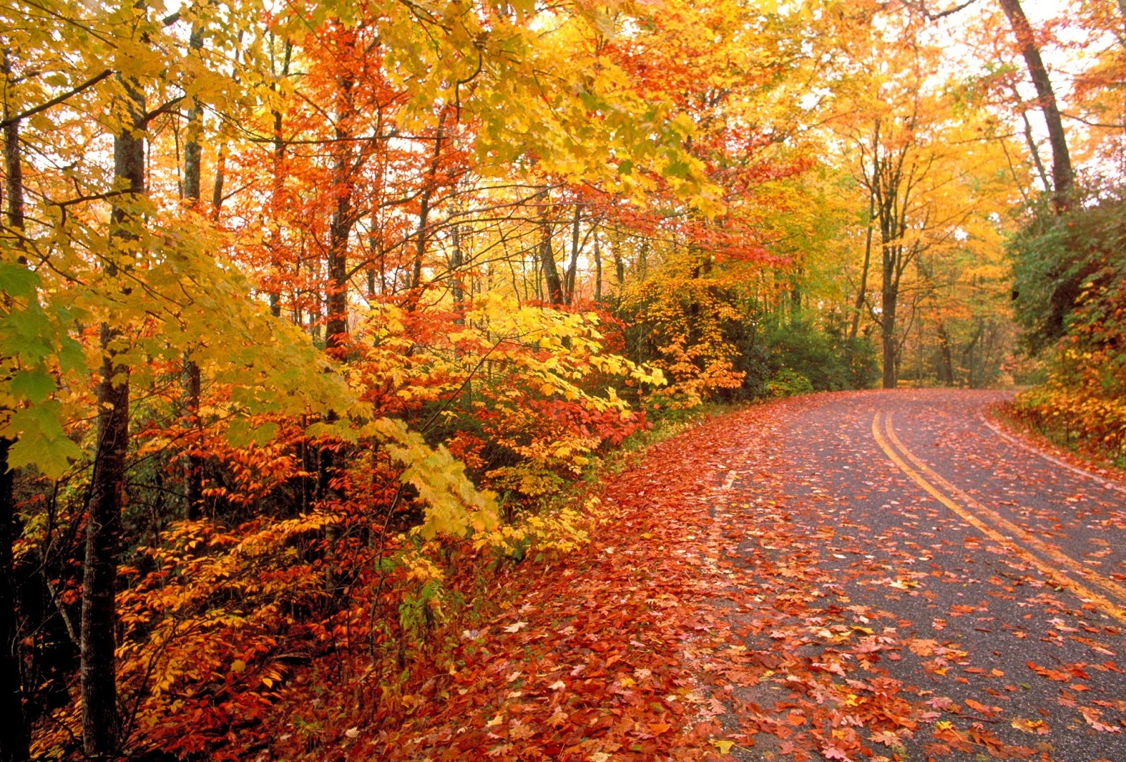Best Drives in Kentucky for Fall Colors
