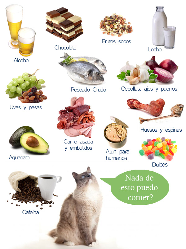 Alimentos prohibidos para el gato maskotzine magazine de mascotas - Alimentos recomendados para perros ...
