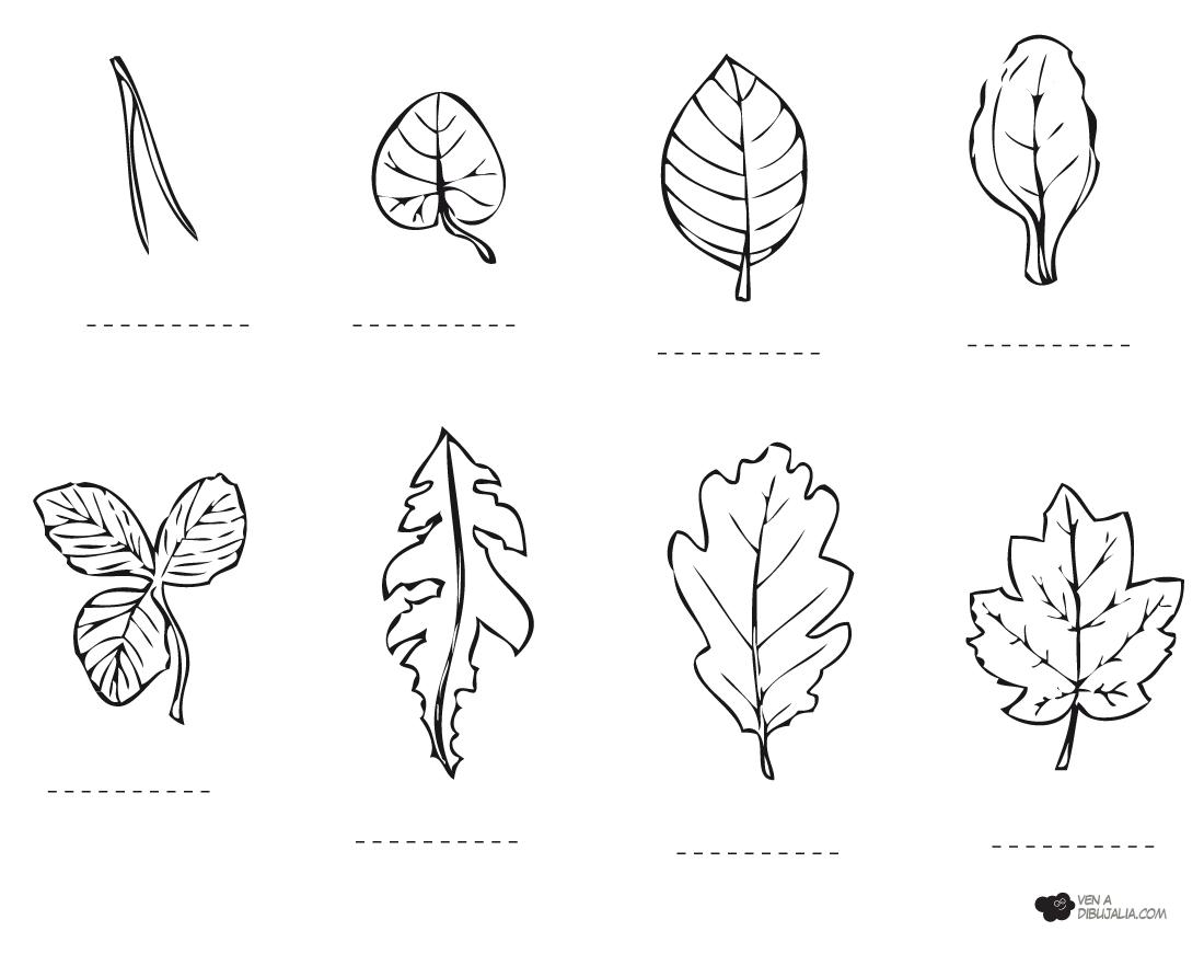 Tipos de Hojas para colorear y pintar | Dibujos para Colorear Gratis