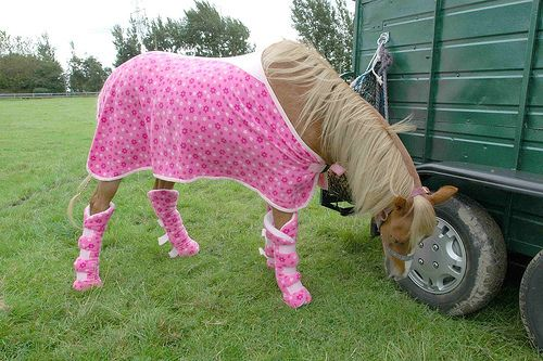Funny horse new images pictures