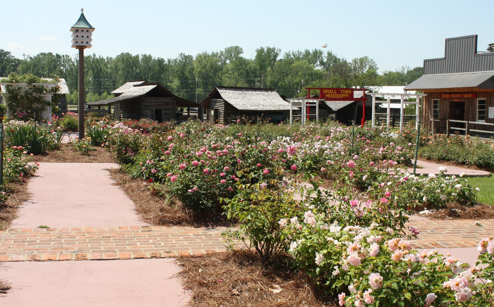 An Old Fashioned Rose Garden | Blog Archives