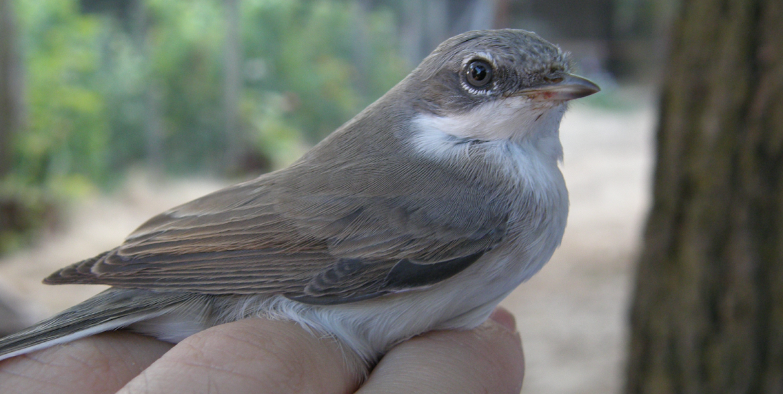 Bird Banding and Nature