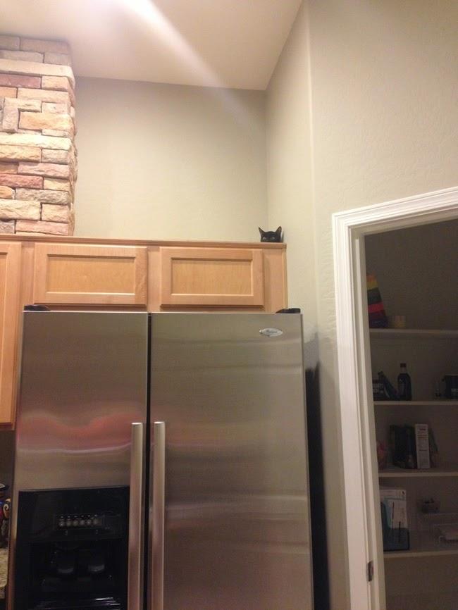 ninja cats playing hide and seek-2