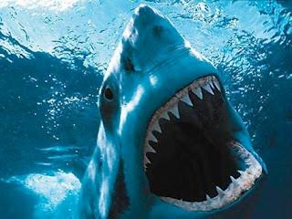5 besar hewan paling berbahaya