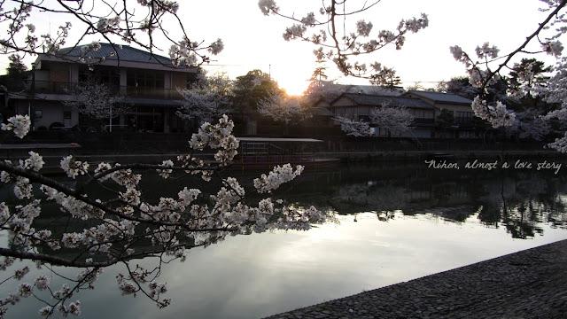 Sakura in Uji