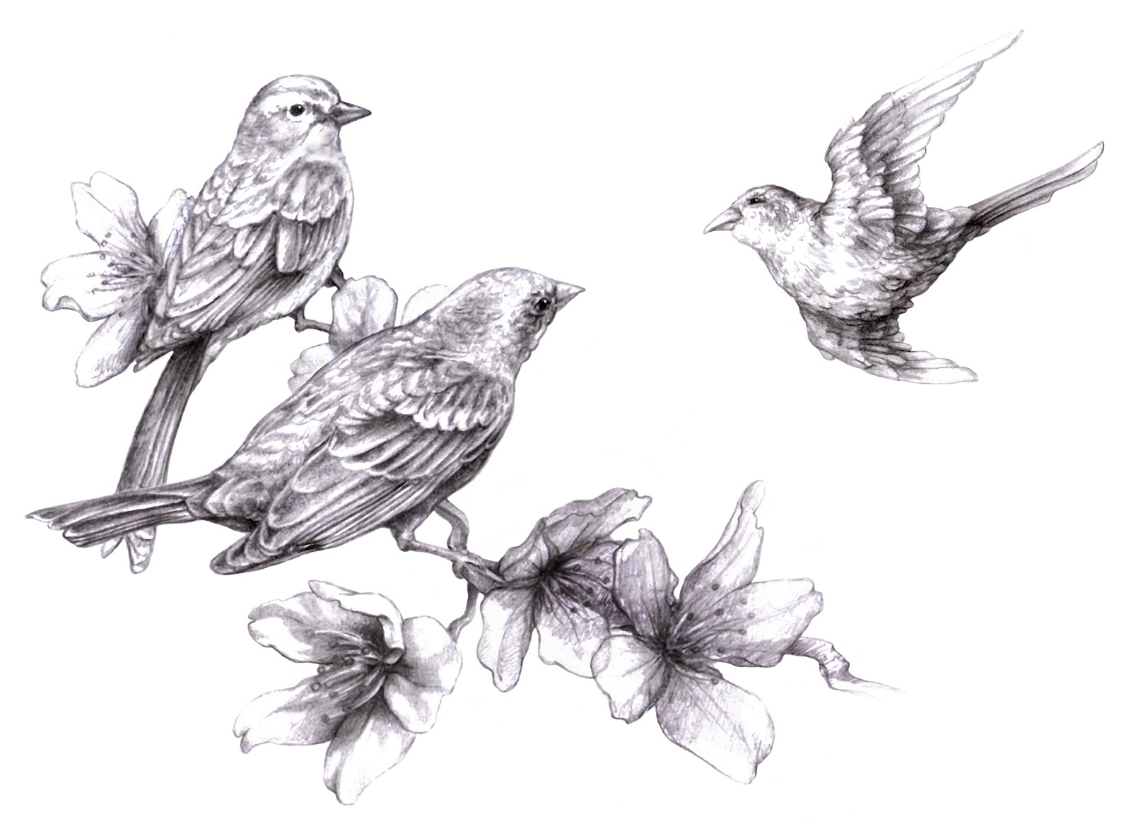 Realistic sparrow drawing