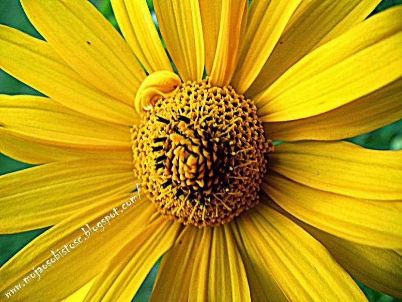 jak fotografować kwiaty