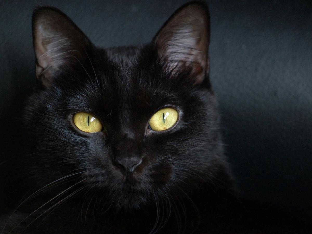 http://4.bp.blogspot.com/-UTEaDlsBEkM/TbYhTN4fWGI/AAAAAAAAATc/4aHNtUlK0cs/s1600/gato-negro1.jpg