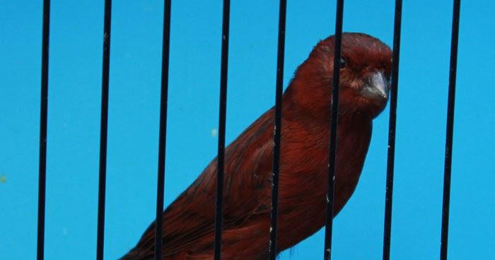 canarytales.blogspot.com