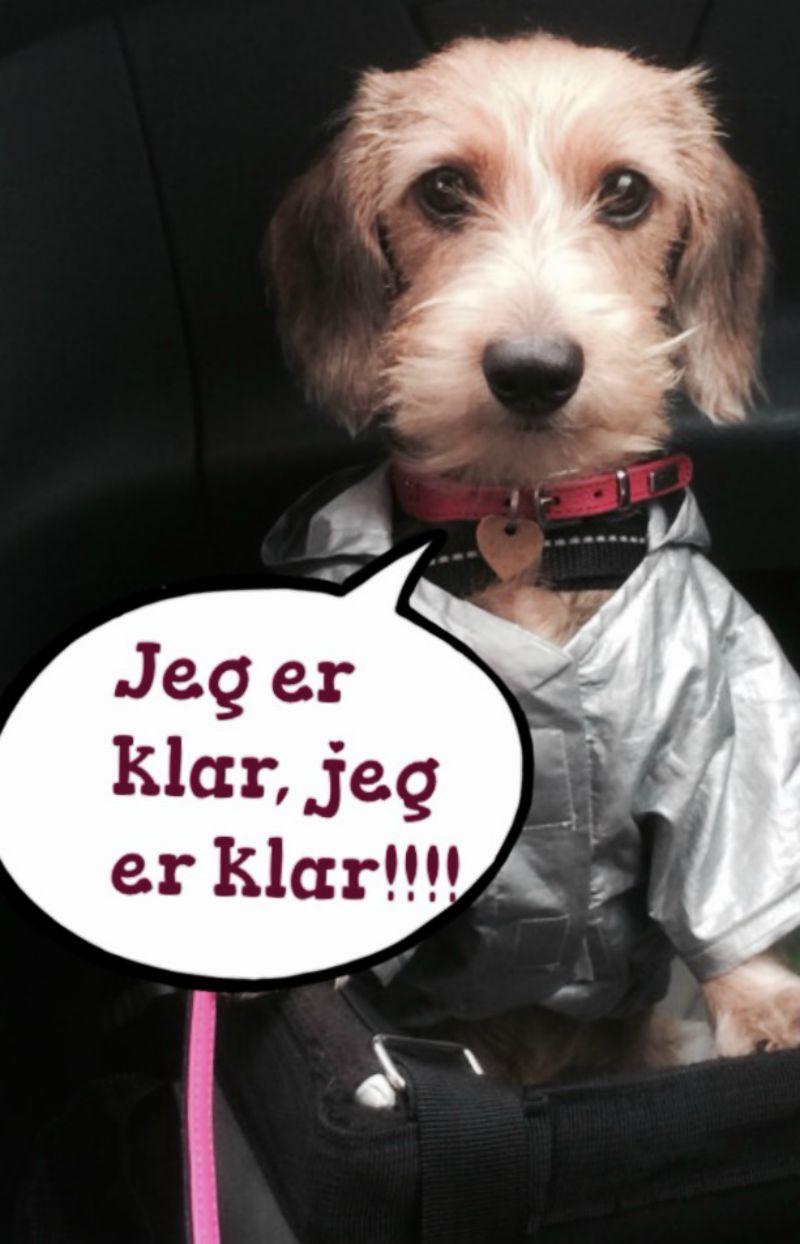 store modne kvinder cuckold dk