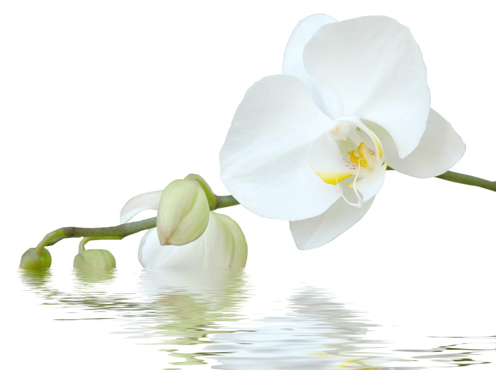 barbara reisen tr ume scheinen mir wie orchideen. Black Bedroom Furniture Sets. Home Design Ideas