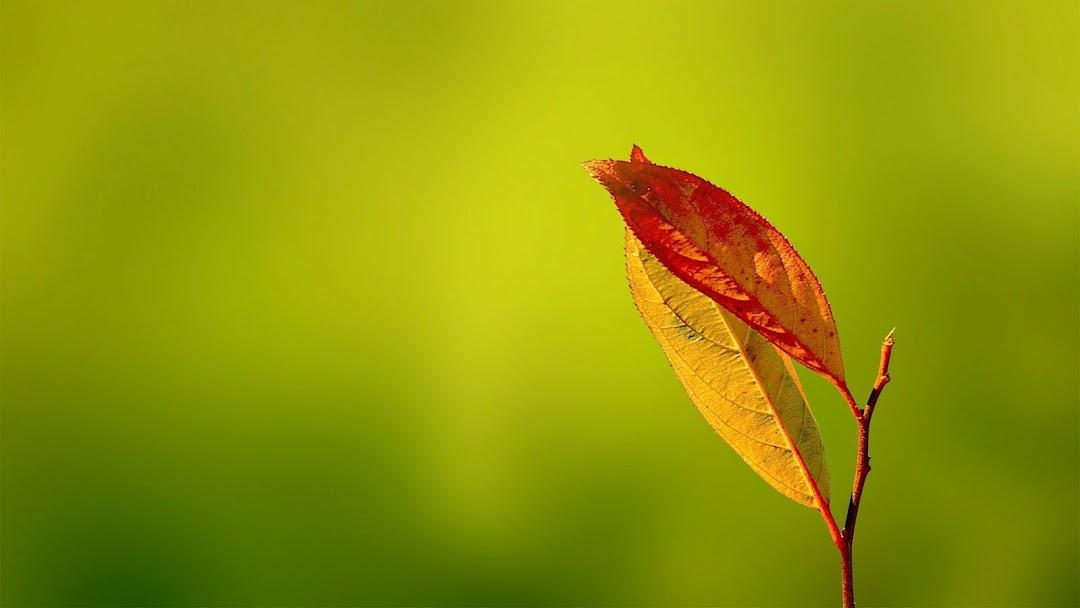 Leaves Macro HD Wallpaper 12
