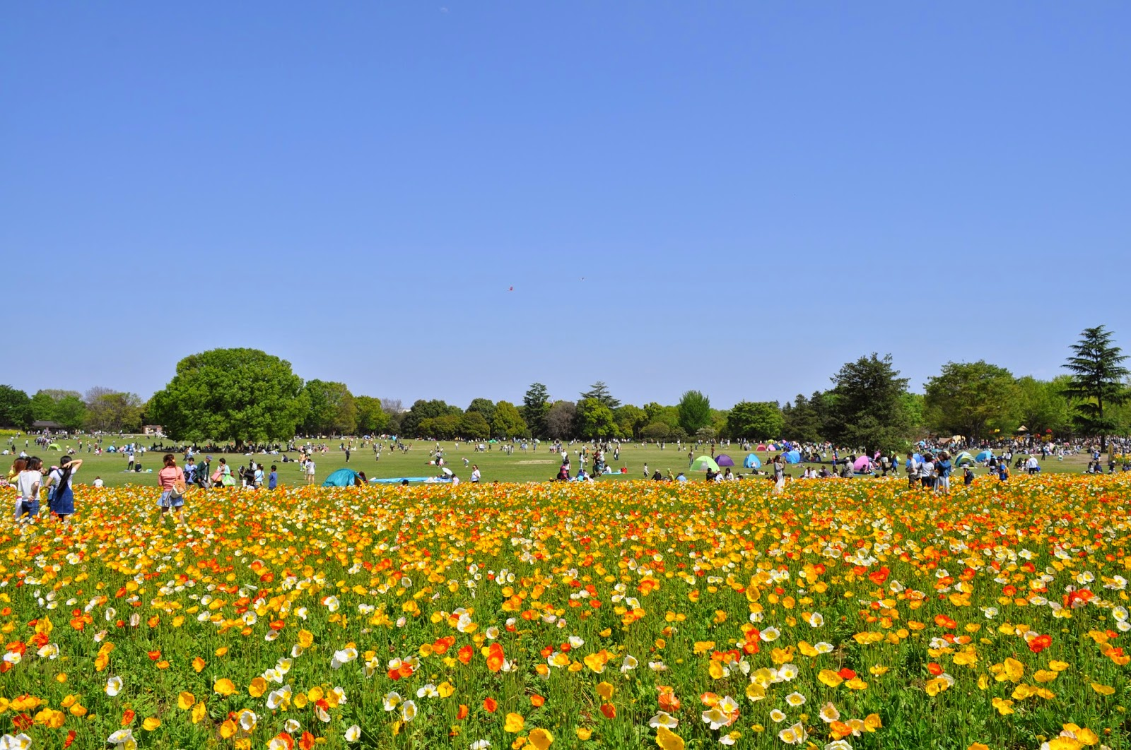 The Park Brings Us City Dwellers To A Place Literally Filled With Nature Where Everything Looks So Beautiful And Vibrant Its Wonderful