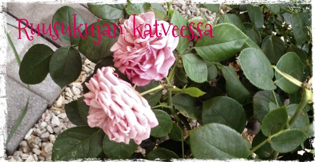 Ruusukujan katveessa
