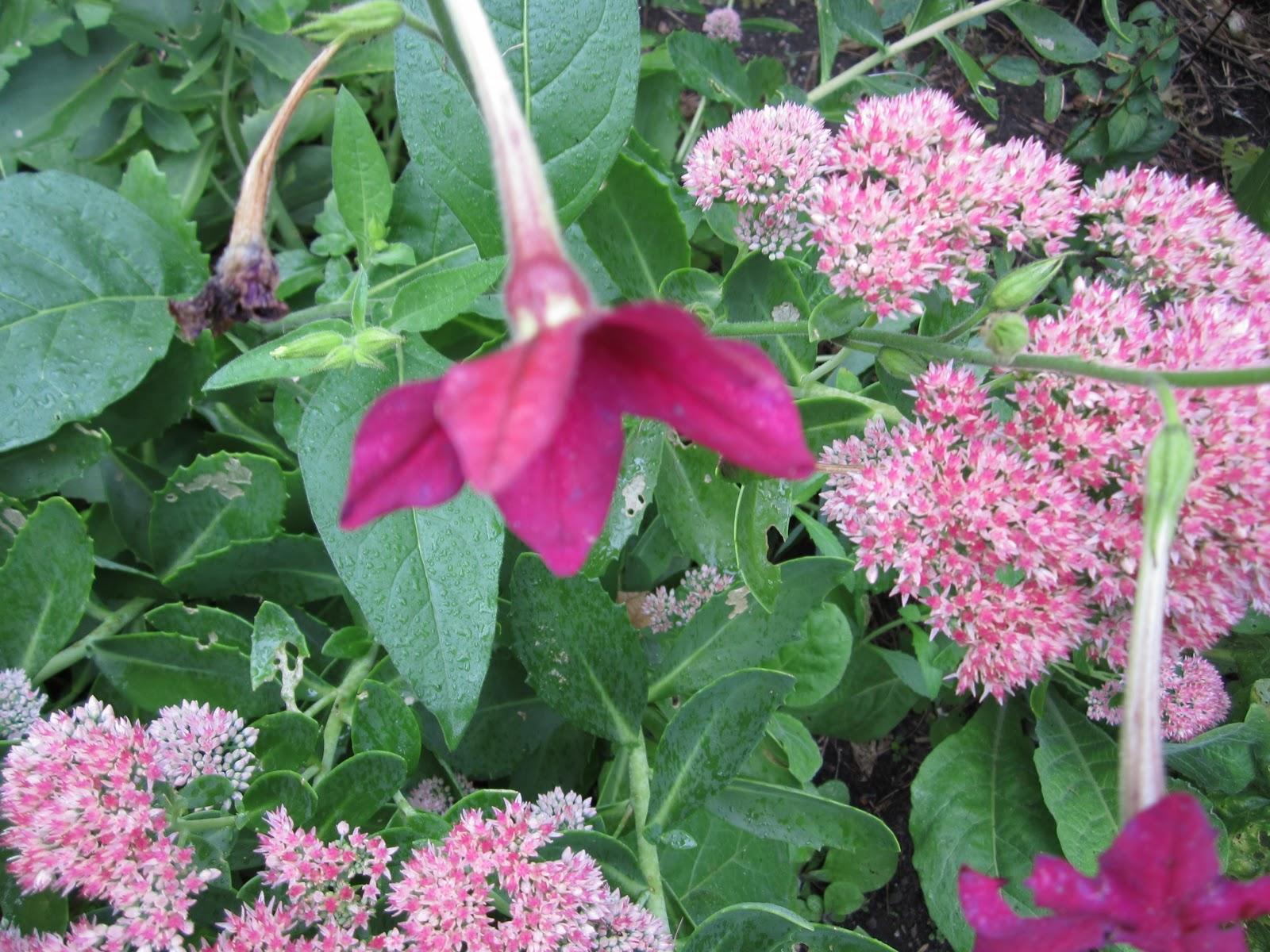 Clomid endometriosis pain