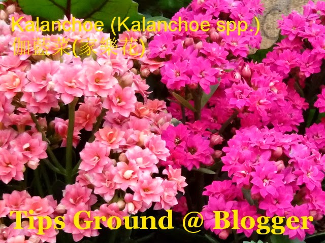 tips ground learn the names of flowers and plants part two, Natural flower