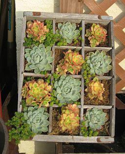 maceta oara cactus