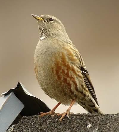 imágenes de aves