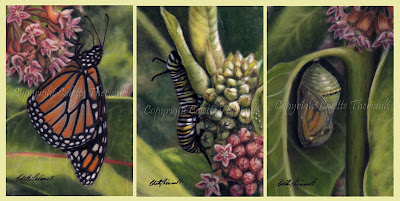 Monarch Butterfly Development and Common Milkweed painting series by Colette Theriault