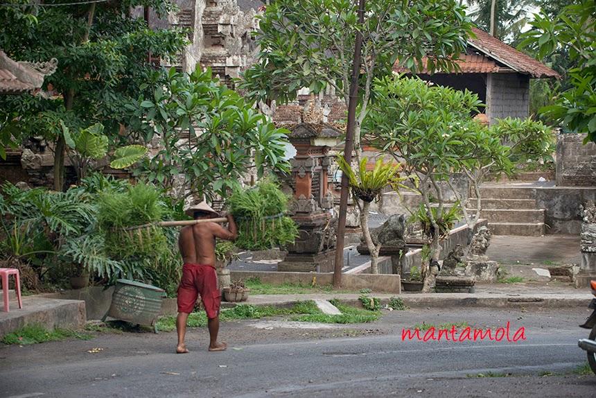 Petulu Bali, farmer