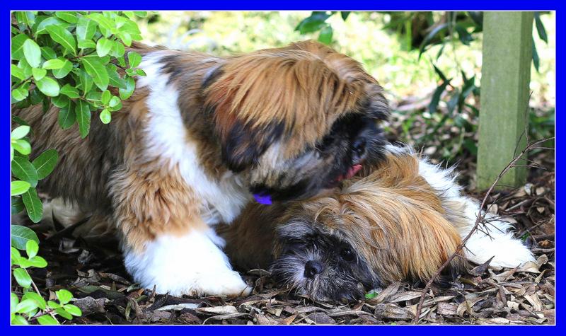DENIM & MARLEY