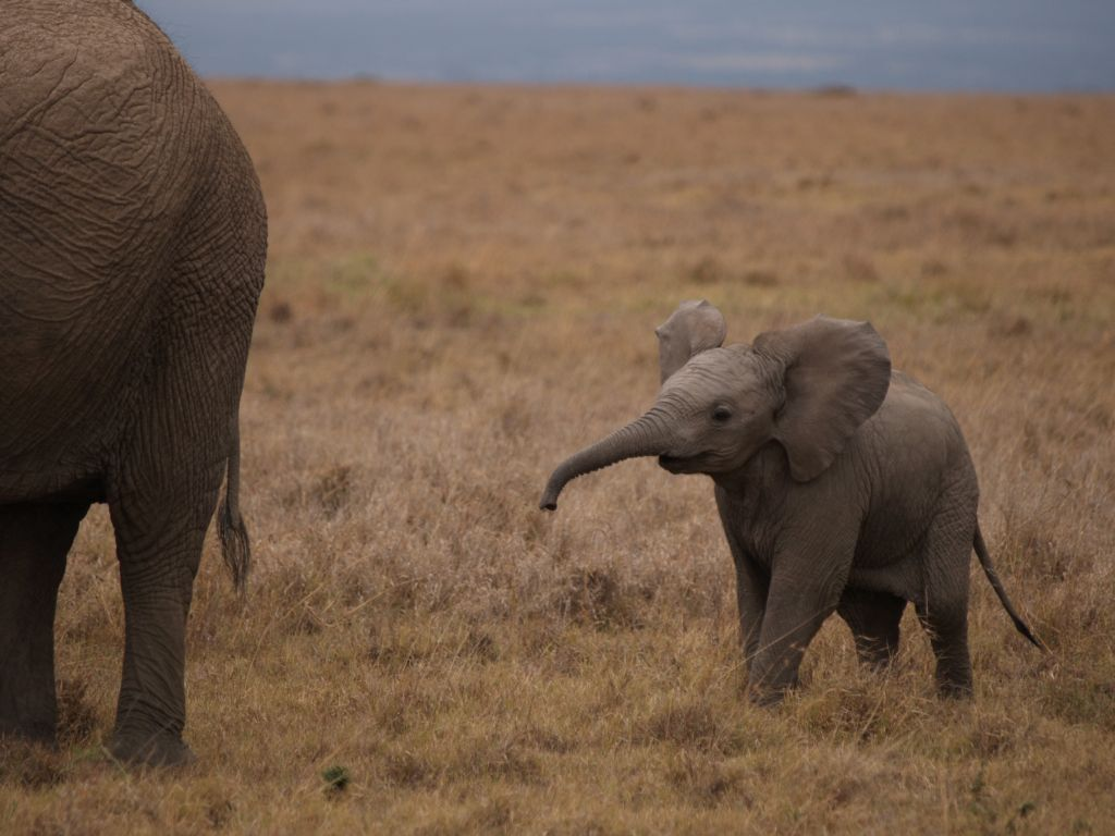Heady with happiness baby elephants