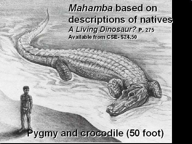 Living Dinosaurs In Wikileaks Video And The Likouala Swamp In The Congo 21