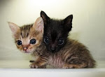 Help Homeless Kittens