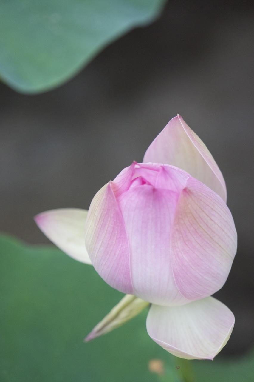 Eugene Hn Ceramic Artist Featuring The Beautiful Lotus Flower At
