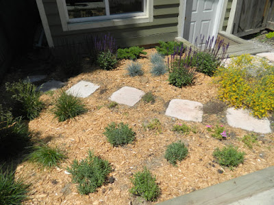 Xeriscape Leslieville garden install after Paul Jung Gardening Services Toronto